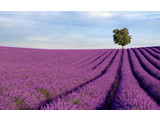 Geurolie Lavender Fields 20 ml