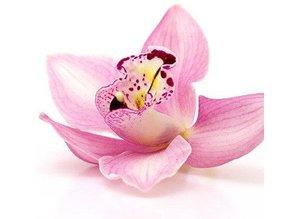 The Candleshop Collection Geurolie Winter Orchid - Zelf geurkaarsen - waxmelts maken