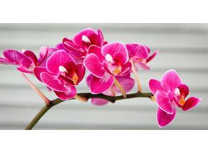 Geurolie Wild Orchid & Plumeria 20 ml - Zelf geurkaarsen - waxmelts maken