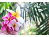 Geurolie Wild Orchid & Plumeria 20 ml