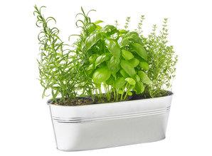 Geurolie Soothing Rosemary & Thyme 20 ml - Zelf geurkaarsen - waxmelts maken