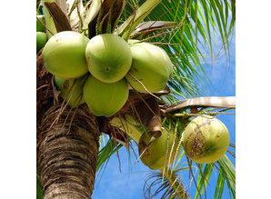Geurolie Fresh Coconut - Zelf geurkaarsen - waxmelts maken