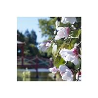 Replica Springtime in a Park