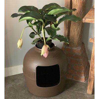 RHRQuality Kattenbak Flower XXL bruin onzichtbare kattentoilet