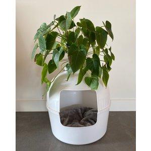RHRQuality Lettiera per gatti Flower XXL - White