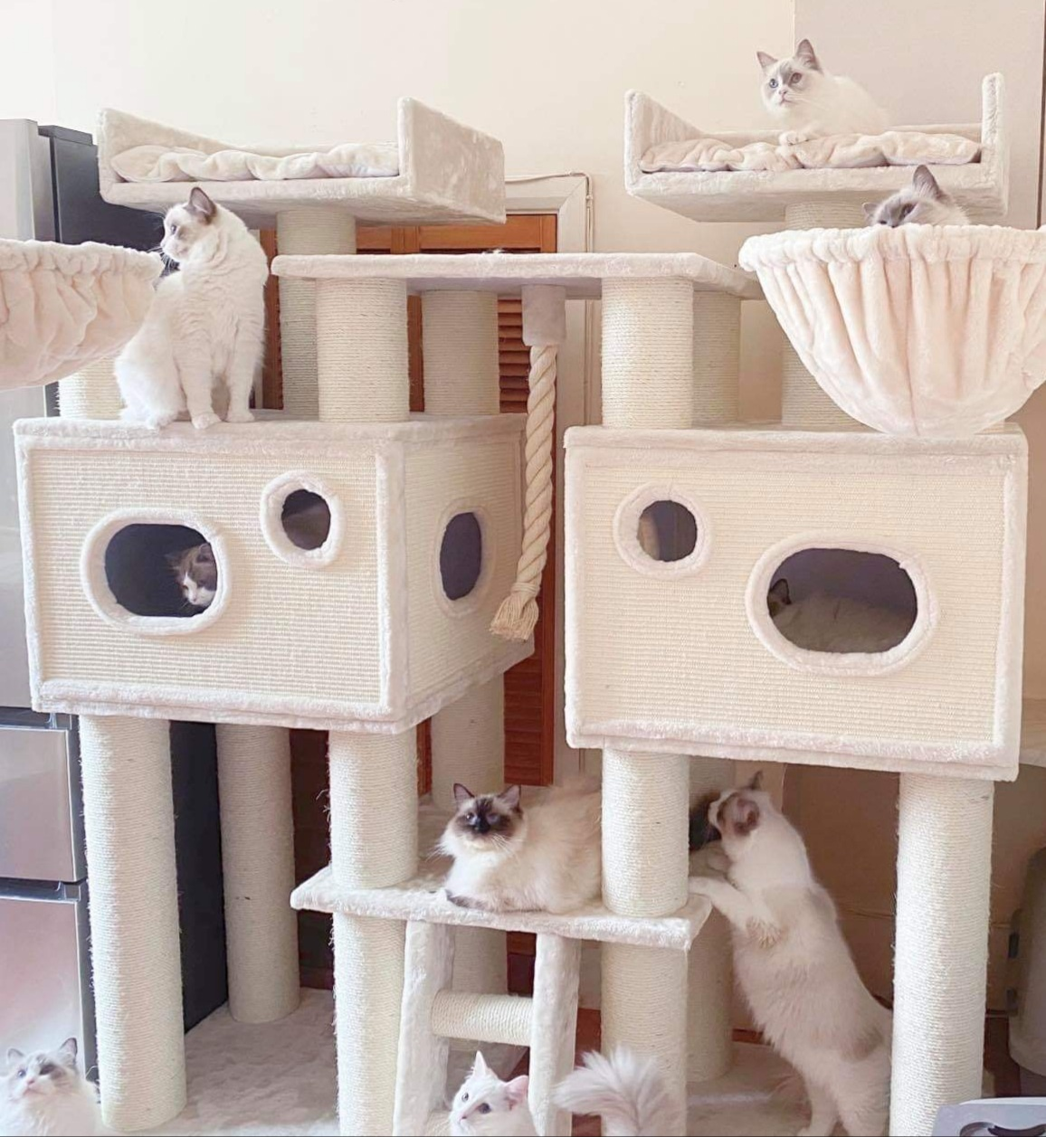 Royal cat Palace