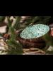 P'Tit Pot Coconut Bowl - Green Forest