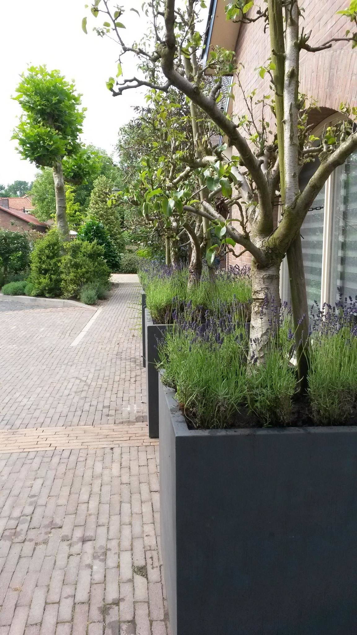 Vierkante zwarte plantenbak groot