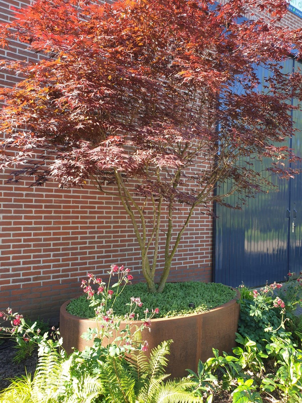 Cortenstaal plantenbak boom