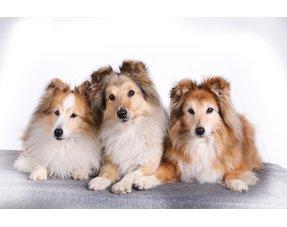 Voor honden tot 16 kg