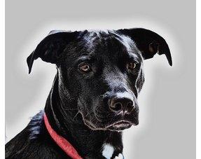 Voor honden tot 23 kg