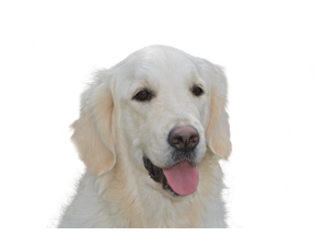Voor honden boven de 23 kg