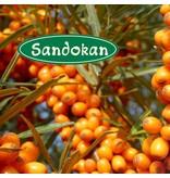Sandokan BIO-Sanddorn-Saft direkt gepresst  100 % 0,33L