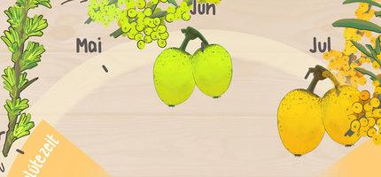 Das Sanddorn-Jahr - So gedeiht unser Bio-Sanddorn