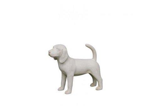 Beagle pup grijs
