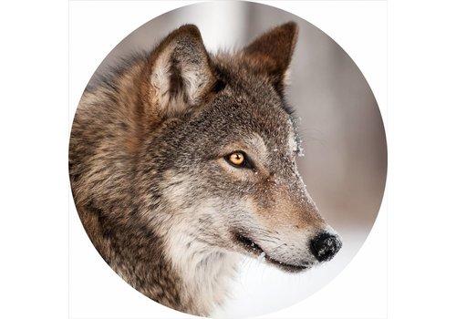 Glas schilderij rond Wolf diameter 80cm
