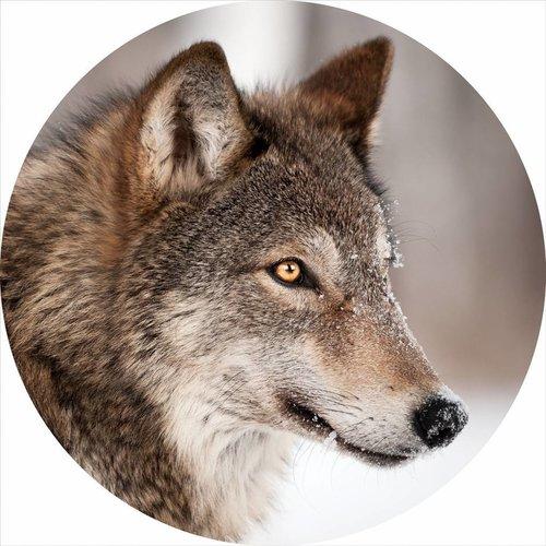Gave Glas schilderij rond Wolf diameter 80cm