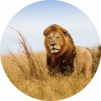 Glas schilderij rond Leeuw dia 100cm