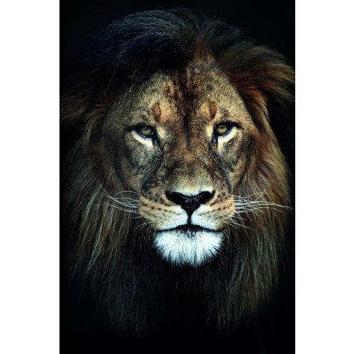 MondiArt Dibond schilderij  Koning  80x120cm