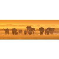 Glasschilderij Groep olifanten 50x150cm
