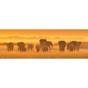 MondiArt Glasschilderij Groep olifanten 50x150cm