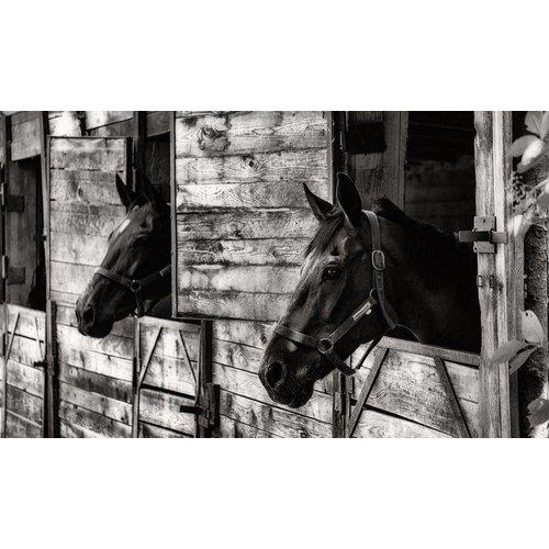 Aluminium Dibond schilderij 118x70cm Paarden