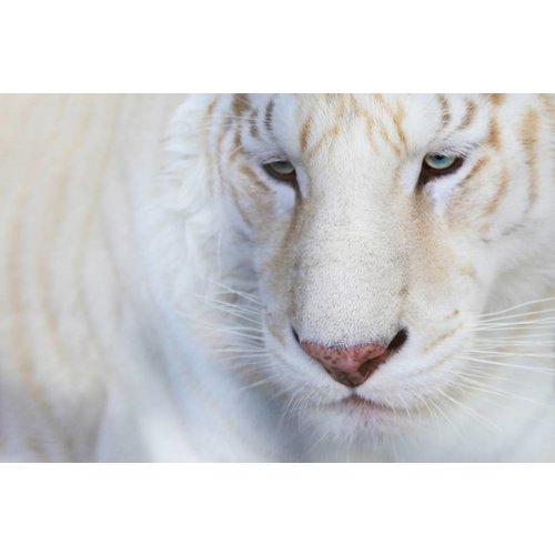 Wandkraft Wandkraft glasschilderij Animal 148x98cm