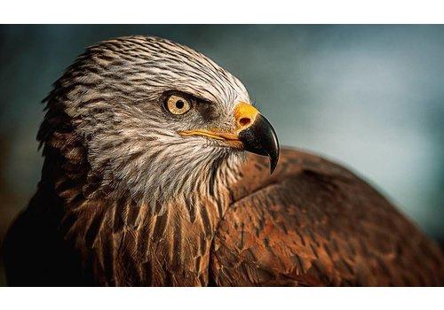 Schilderij glas Vogel 118x70cm