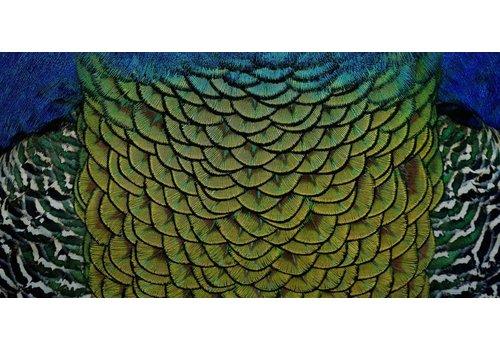 Schilderij dibond rvs  Sierlijk  98x48cm