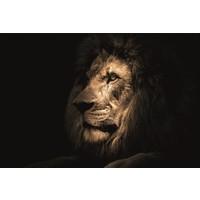 Glasschilderij 80x120 cm Leeuw donker