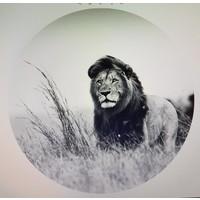 Glasschilderij rond Leeuw dia 100cm   zwart-wit