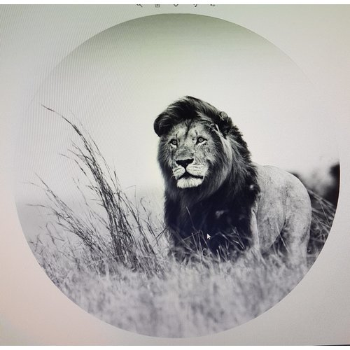 Gave Glasschilderij rond Leeuw dia 100cm   zwart-wit