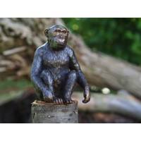 Beeld brons aap Chimpansee
