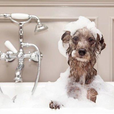 Hundeshampoo und Hundepflege