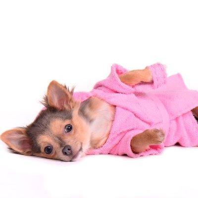 Hundebademantel / Hundehandtücher