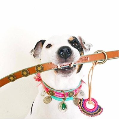 Dog with a Mission Hundeleine