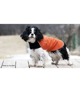 Chilly Dogs - Trail Blazer