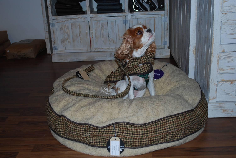 Love My Dog Sidworth Hundekollektion