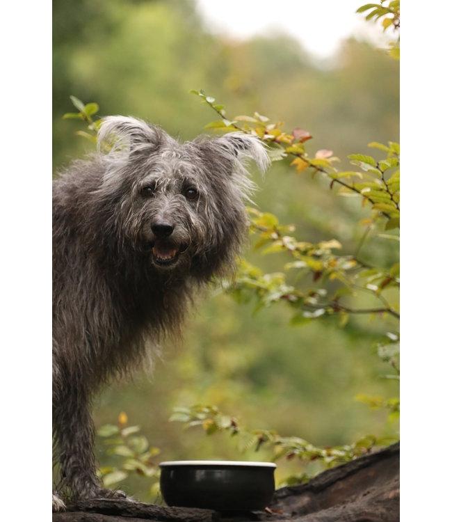 Flöckchens - Keramik Hundenapf Schwarz