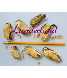 Lunderland - Grünlippmuschel, ganze Muschel mit Kleinteilen 50g