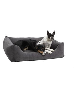Dogs in the City - Box Bed Madison