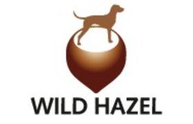 Wild Hazel -