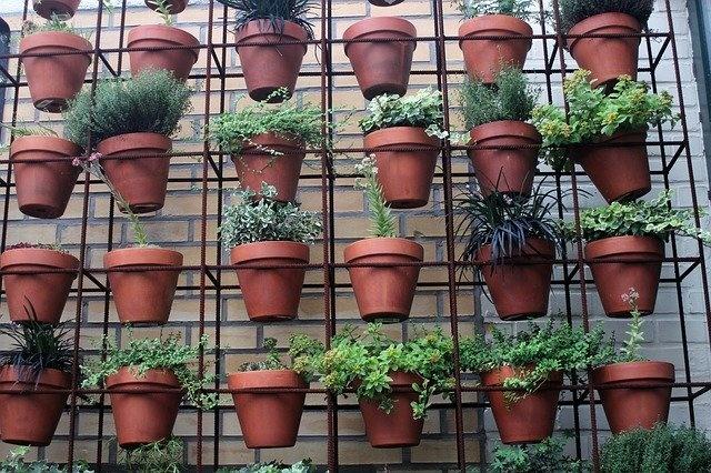Luchtkwaliteit in huis verbeteren met luchtzuiverende planten