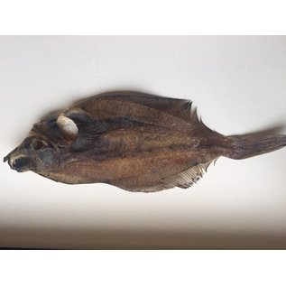 iceborders Flatfish dried - 100gr