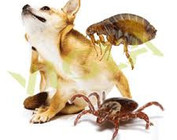 Fleas and Ticks