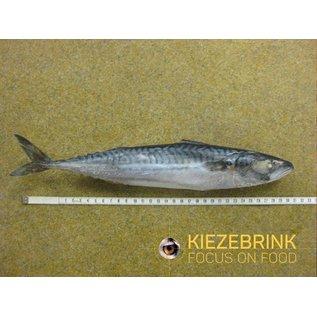 KB BARF Makreel 1kg
