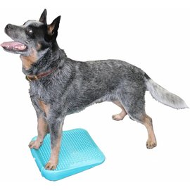 FitPaws FitPAWS® Dog Balance Ramp