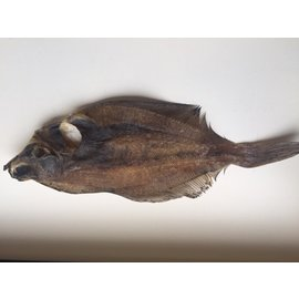 iceborders Flatfish dried - 500gr