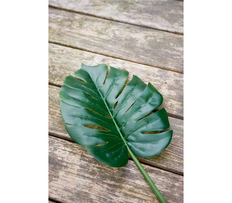 Monstera Leaf M