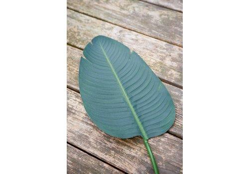 Homestore Strelitzia Leaf M